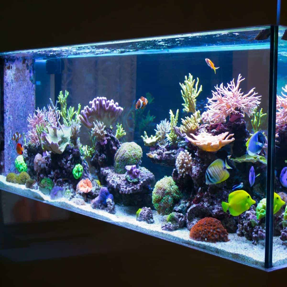 Large fish tank in a dark room.