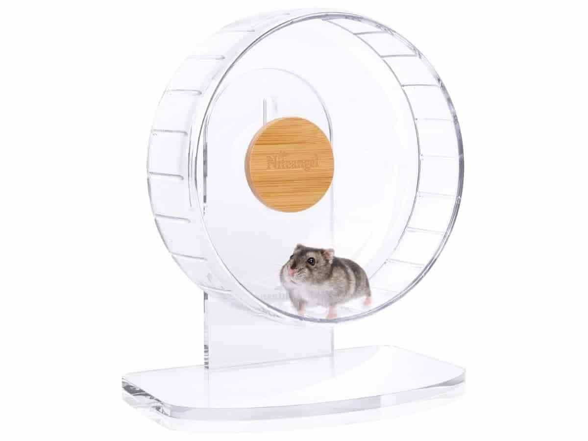 Hamster on a clear exercise wheel.