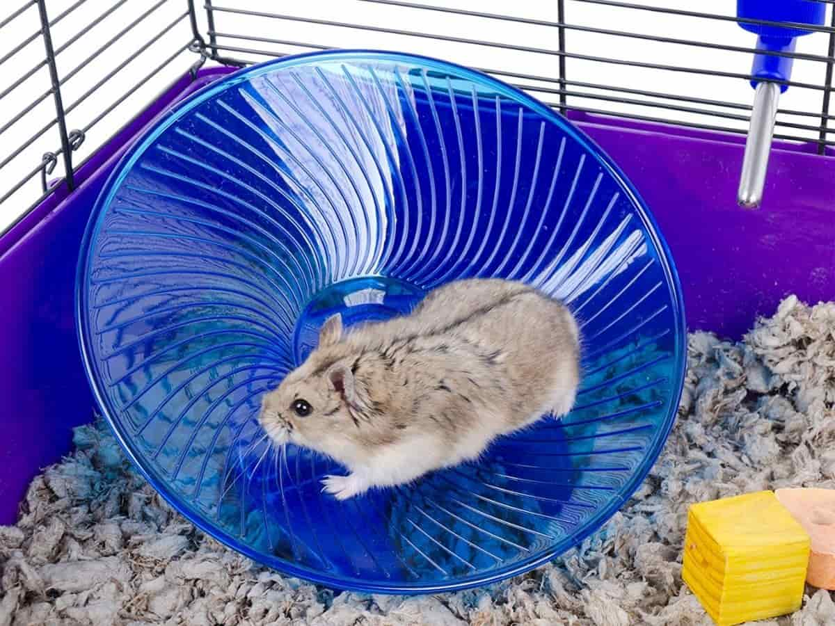 Hamster in a cage running on a flying saucer exercise wheel.