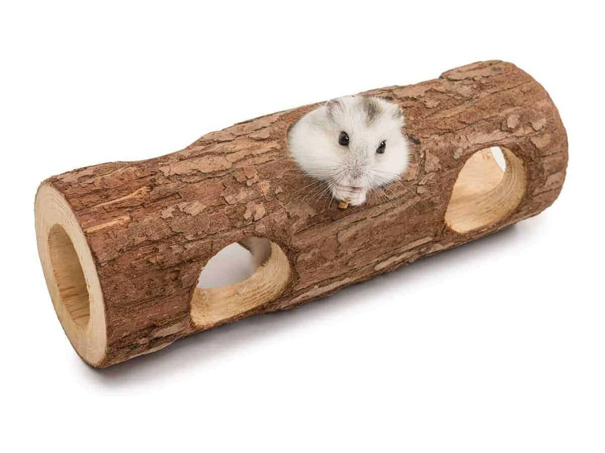 Hamster in a wooden tunnel tube with holes.