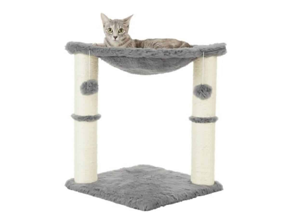 Cat on a hammock attached to a cat tree.