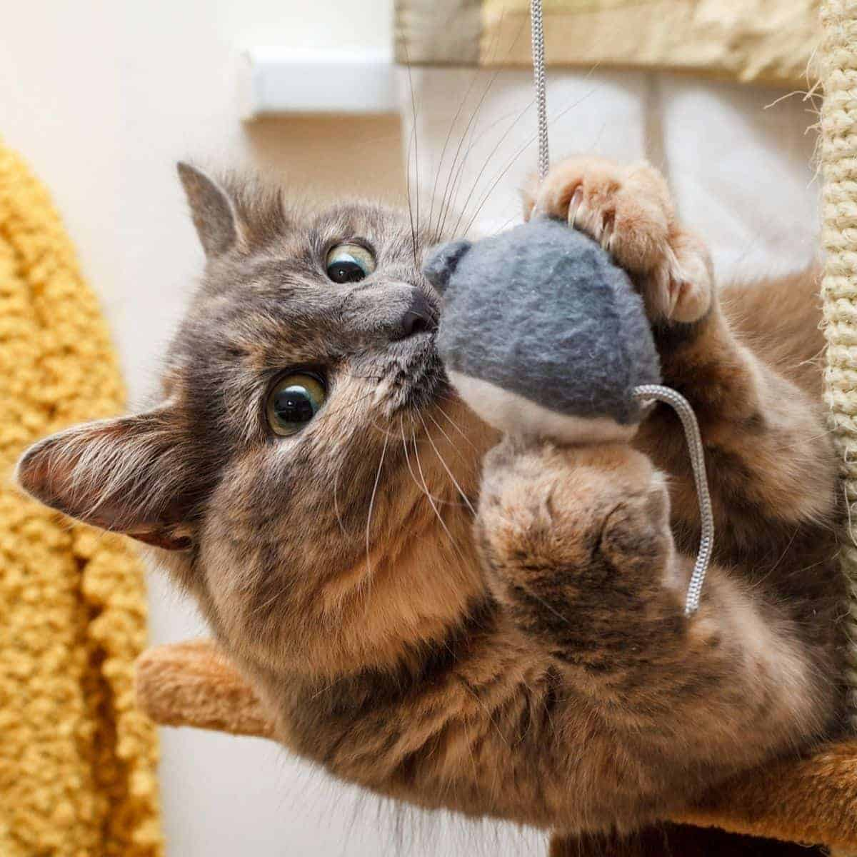 Cat playing with a hanging ball.