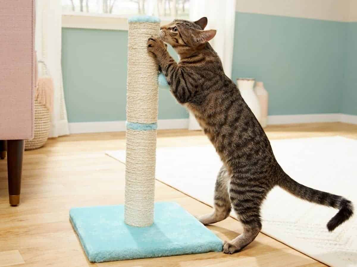 Cat standing while grabbing a scratching post in a room.