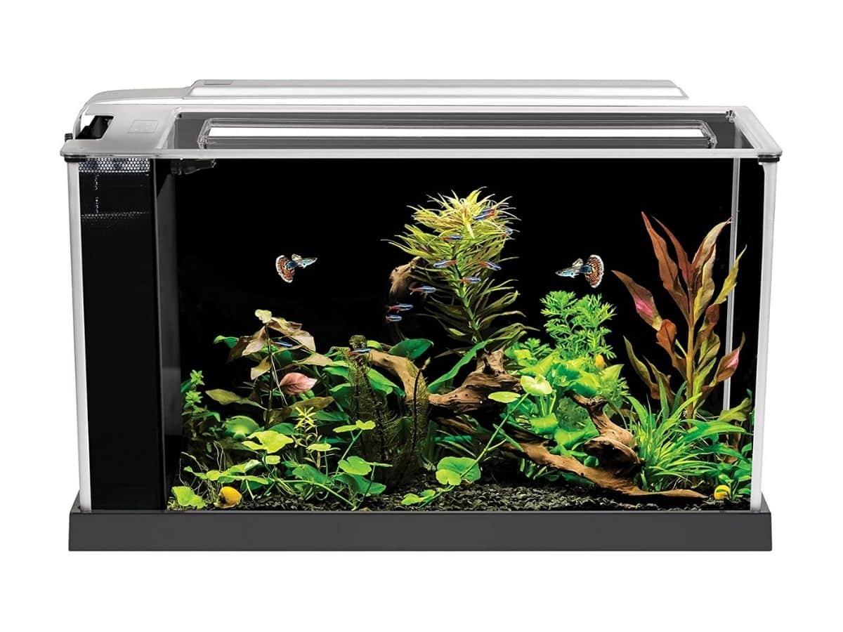 Fluval five-gallon horizontal aquarium with fish and plants.