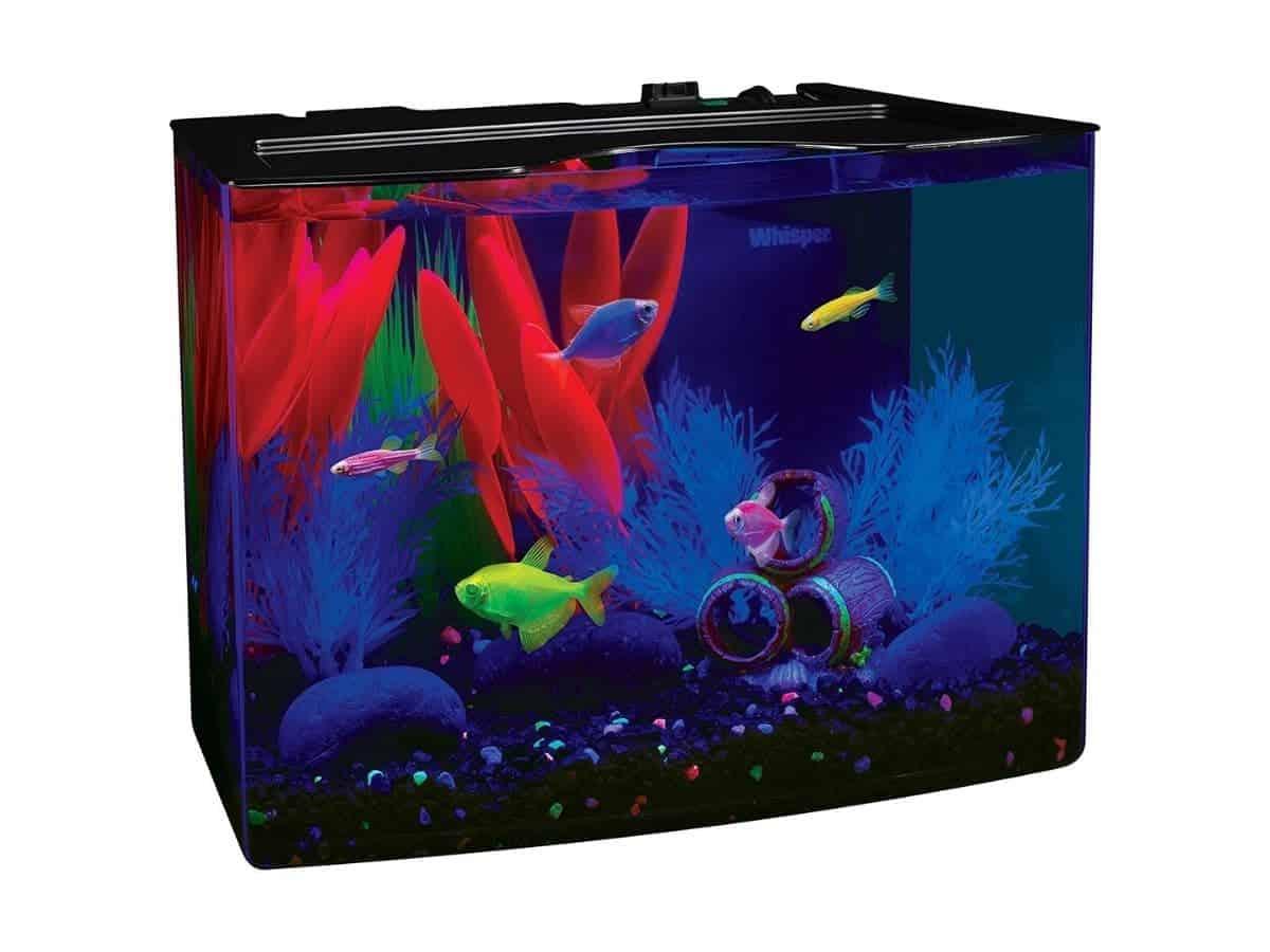 Five-gallon glowing fish tank.