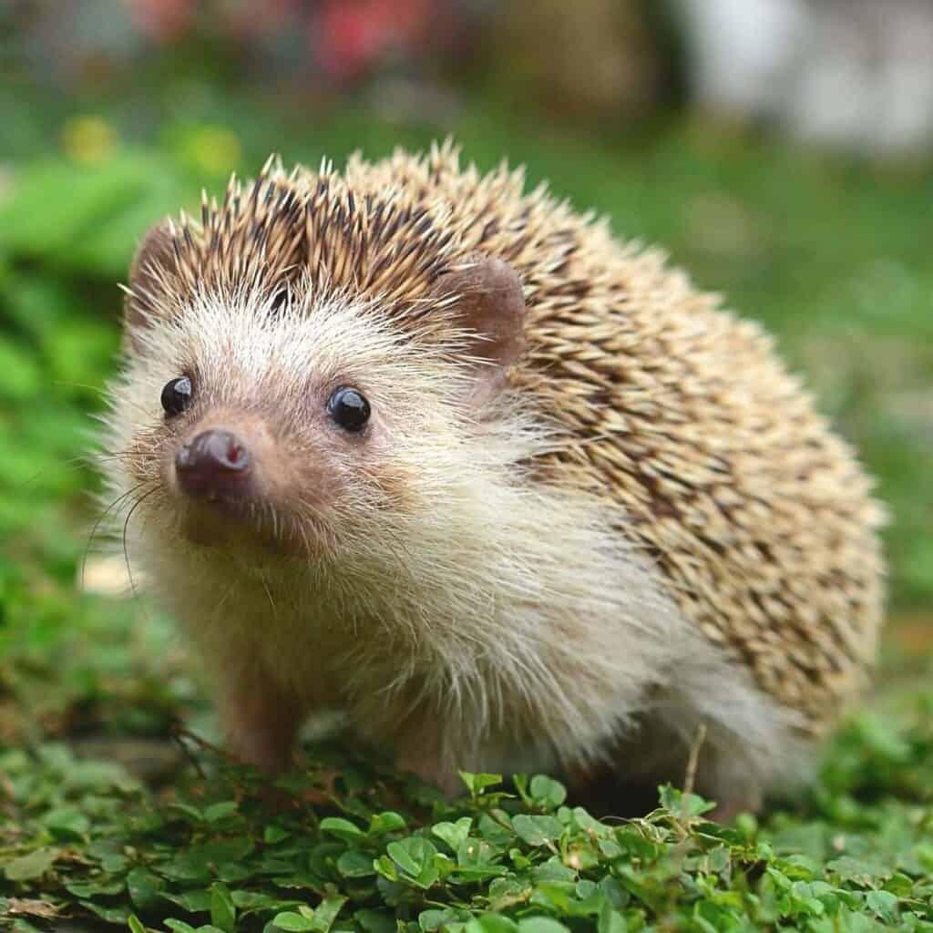 Hedgehog sitting on plants.
