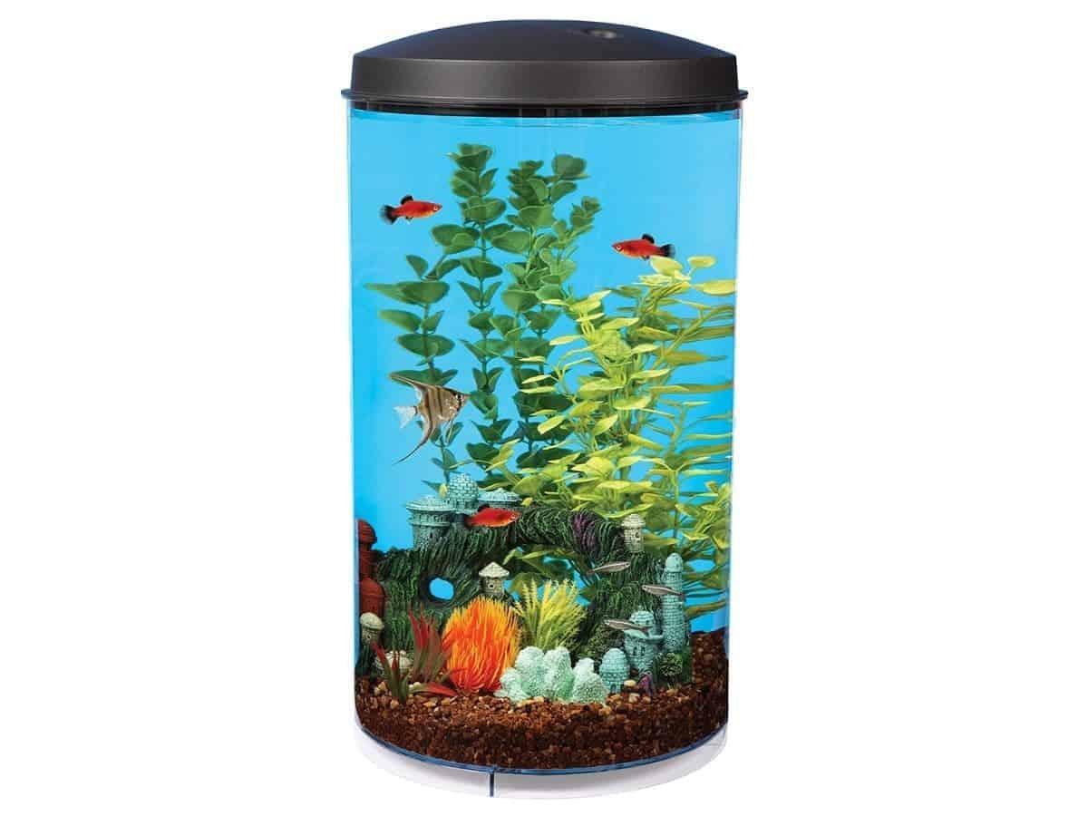 Vertical tube six-gallon aquarium with fish, rocks, and plants.