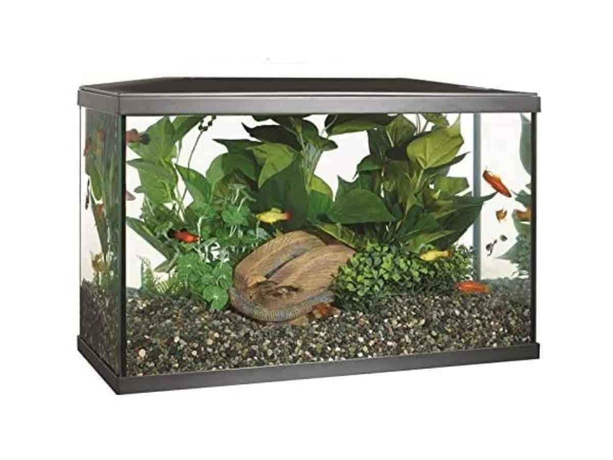 Ten-gallon glass aquarium with fish, rocks, and plants.