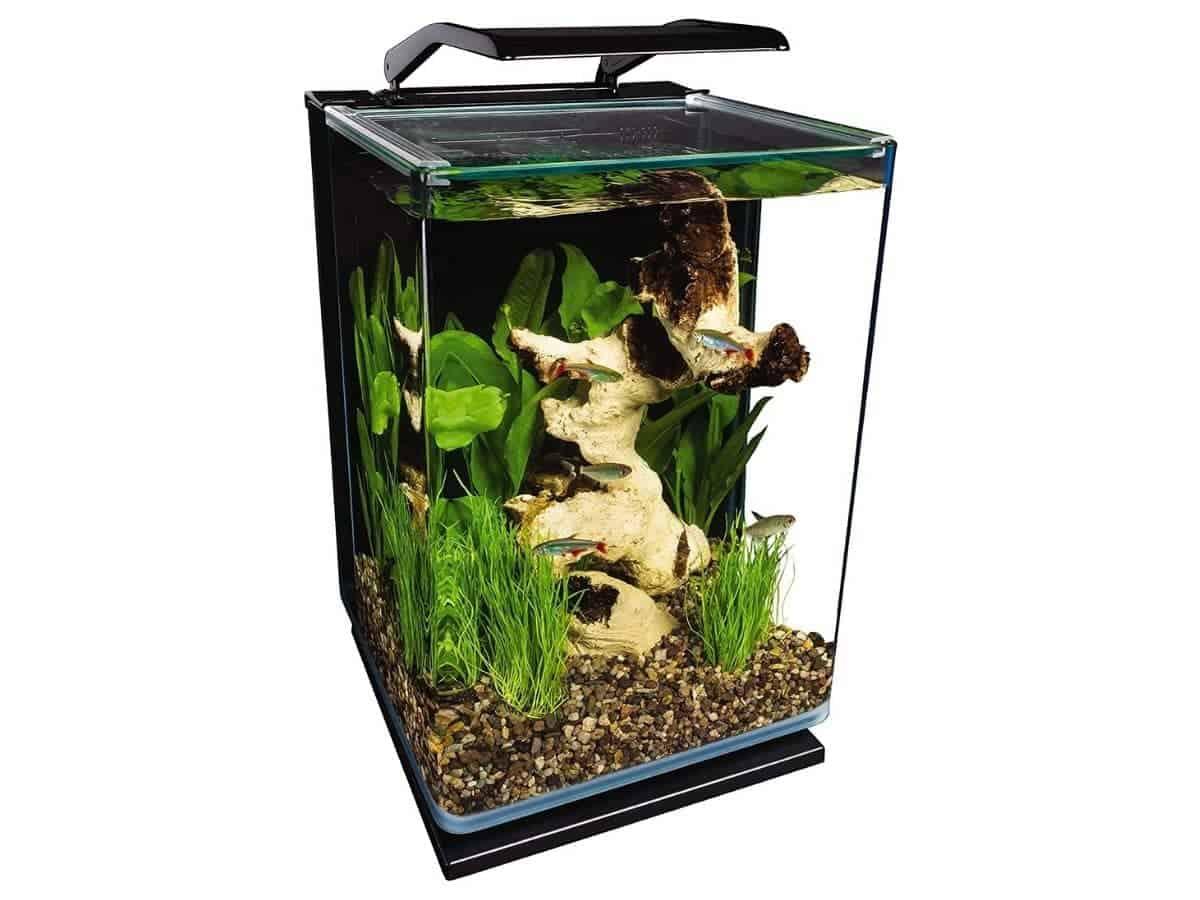 Marineland vertical glass five-gallon aquarium.