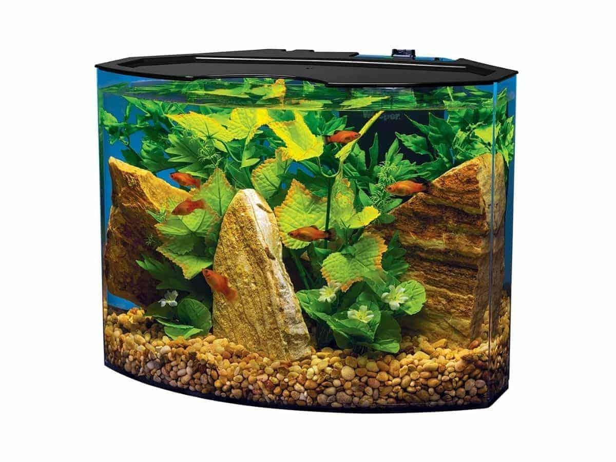 Crescent-shaped aquarium with fish, plants, rocks, and caves.