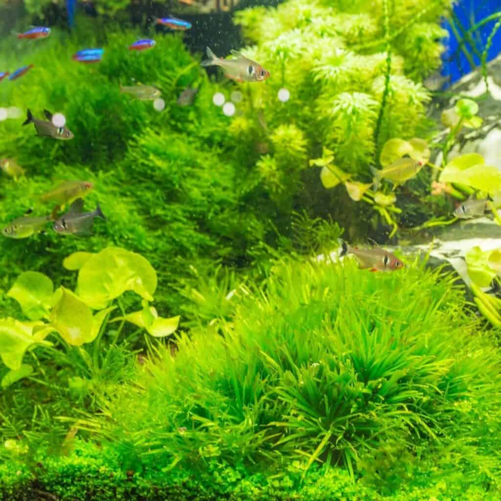 Aquarium filled with small fish and plants.